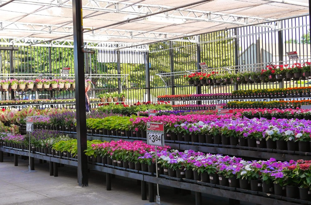 Walmart Garden Department Flowers
